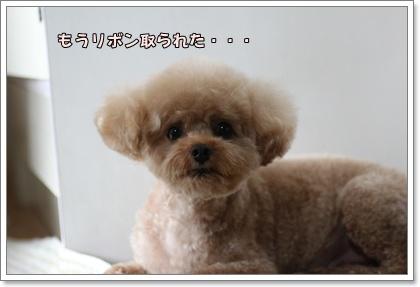 9-23-1_20100923023459.jpg