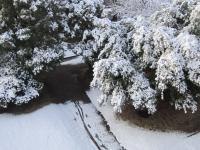 積雪の様子 南側