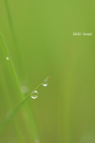 小さな水玉
