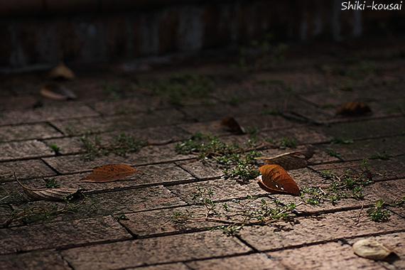 レンガの上の秋