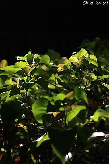 熱帯植物園の光
