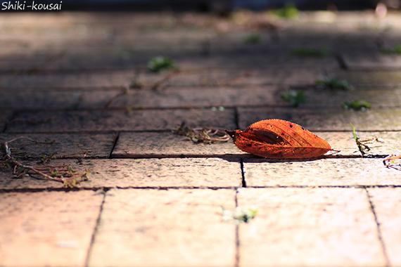 レンガに落ち葉