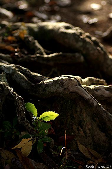 木の根に守られて