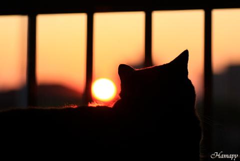 夕日とニャンコ