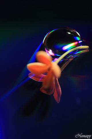 光の水玉 with 金木犀