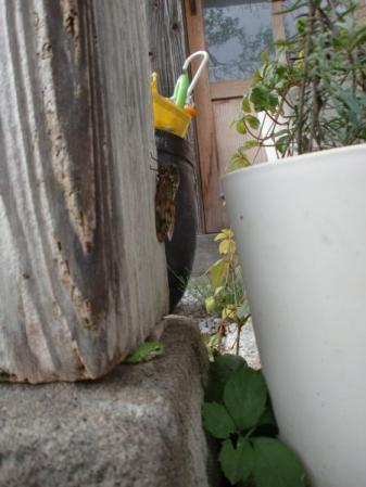雨宿りする蛙とセミ