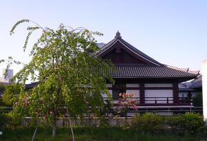 hazakura.jpg