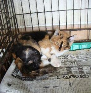 057負傷子猫11月