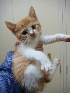 0101ヶ月半子猫