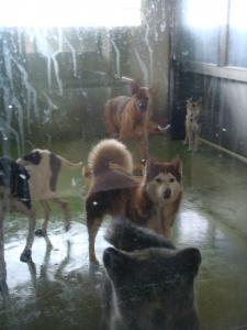 収容犬たち24日
