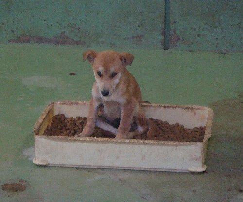 069子犬