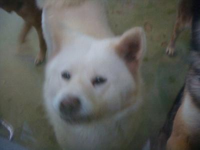 070秋田犬 最終部屋