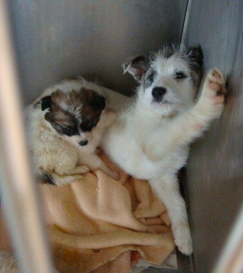 076検疫子犬
