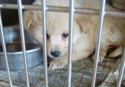 077子犬検疫12月8日
