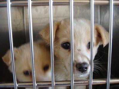 079子犬検疫1