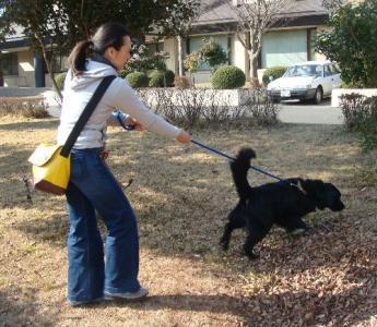 黒い犬1月27日NO2
