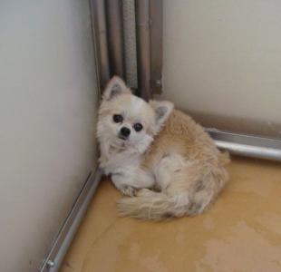 1月27日水曜日 小型犬