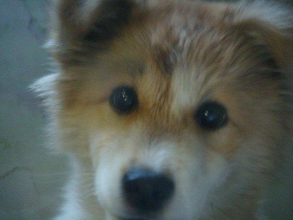 22年2月5日 1日目 子犬生後5ヶ月くらい