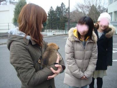 茨城から3頭子犬
