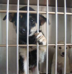 142検疫部屋子犬8月9日