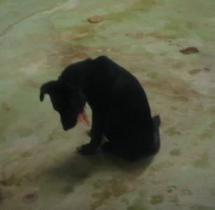 029MIXの子犬21日