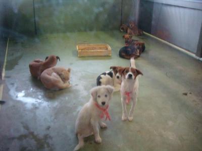 031収容犬 21日