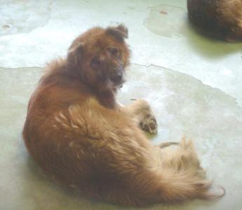 085老犬 2010