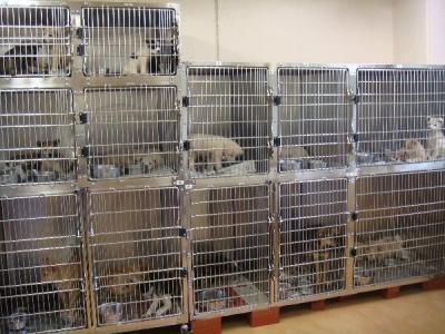 057子犬20102月10日