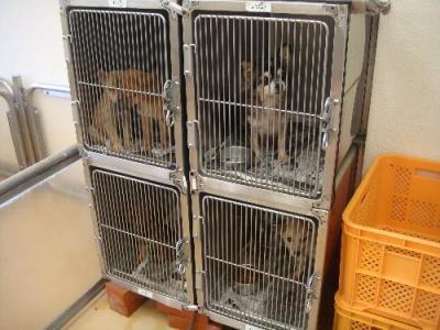 058子犬10月21日2010-1