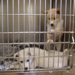 056子犬収容部屋