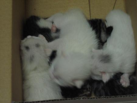 子猫たち 3