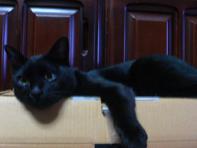 猫写真 014