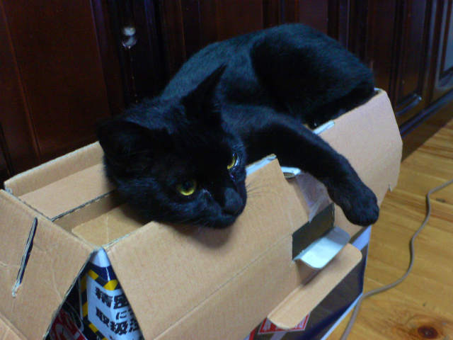 猫写真 013
