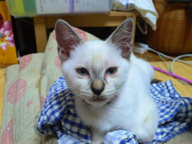 猫写真 002