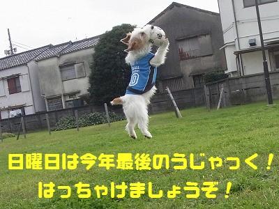 Nov11 092ぽ