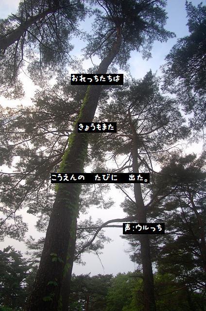 20110610-1.jpg