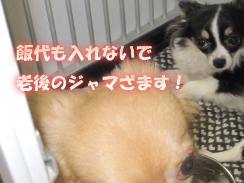 10_20120204232419.jpg