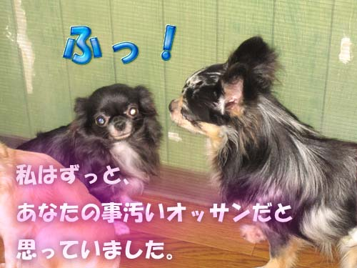 10_20120206110809.jpg