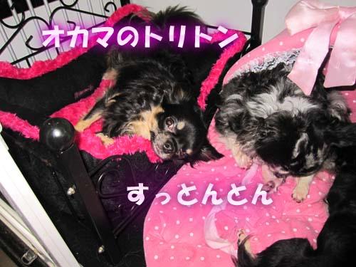 12_20120130154724.jpg