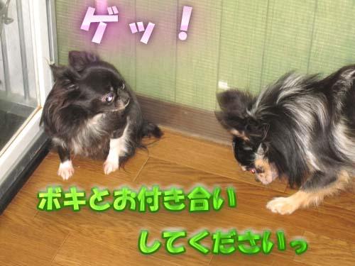 1_20120206110740.jpg