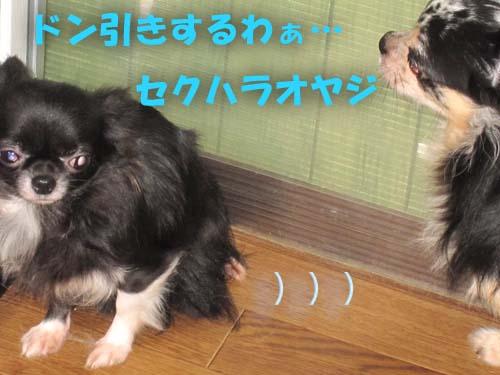 2_20120206110740.jpg