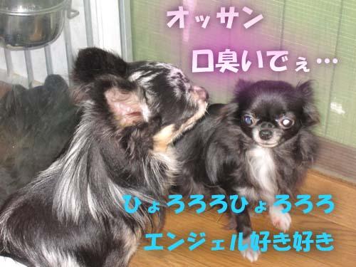 5_20120206110739.jpg