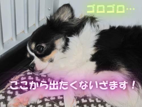 7_20120204232301.jpg