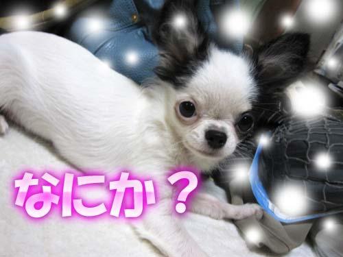 7_20120229105331.jpg