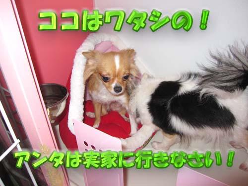 8_20120107173408.jpg