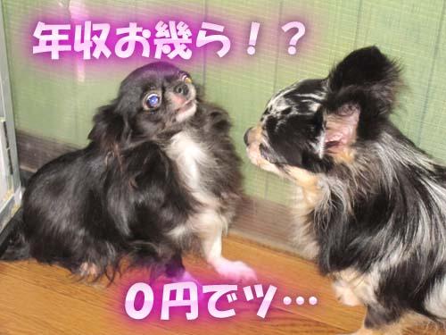 8_20120206110810.jpg