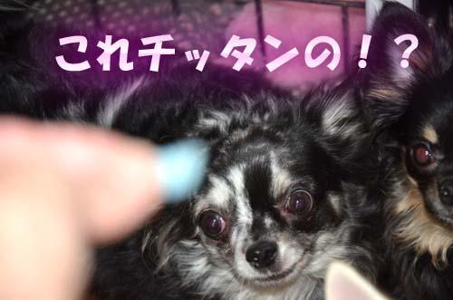 9_20111202134444.jpg