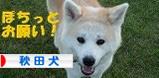 nihonken2.jpg