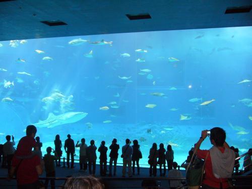 沖縄美ら海水族館-3
