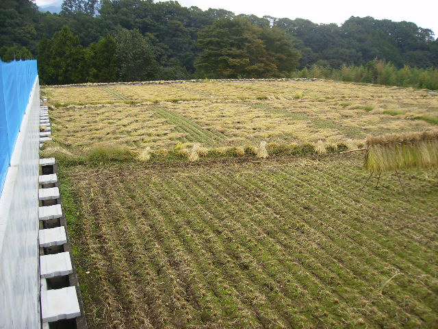稲刈り中35